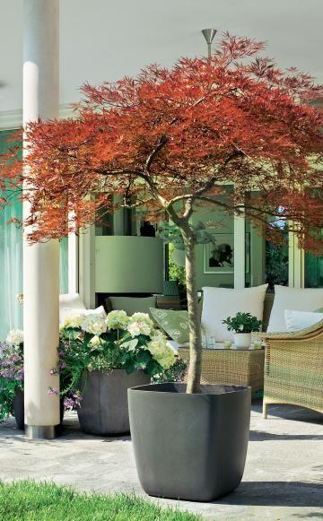 winterharte geh lze f r die k belbepflanzung garten pinterest garten k bel und garten ideen. Black Bedroom Furniture Sets. Home Design Ideas