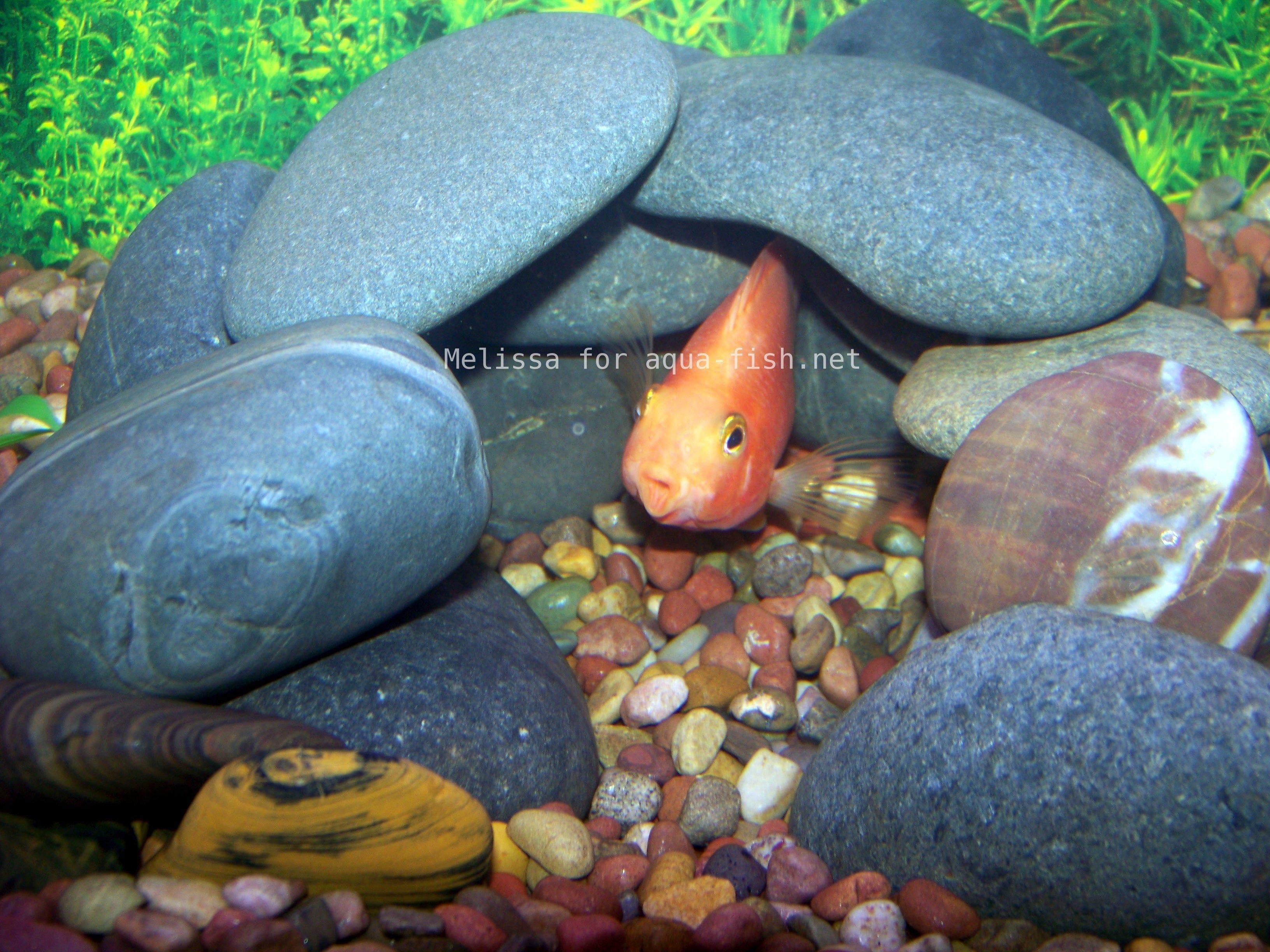 Diy aquarium rock cave aquarium rocks are a great way to for Fish aquarium rocks