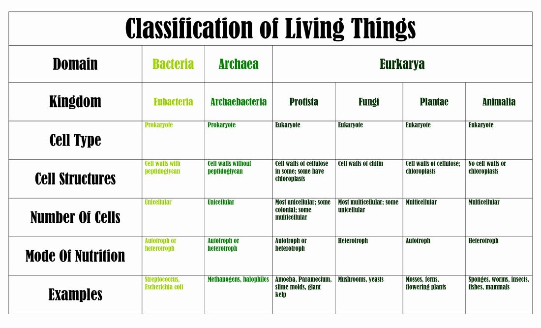 Classification Of Living Things Chart Biology Worksheet Science Teaching Resources Teaching Life