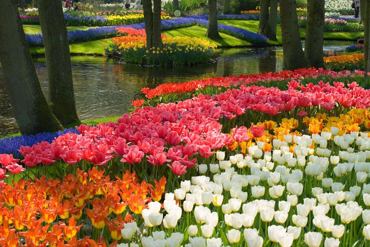50 paisajes donde siempre deber a ser primavera holanda - Jardines y paisajes ...