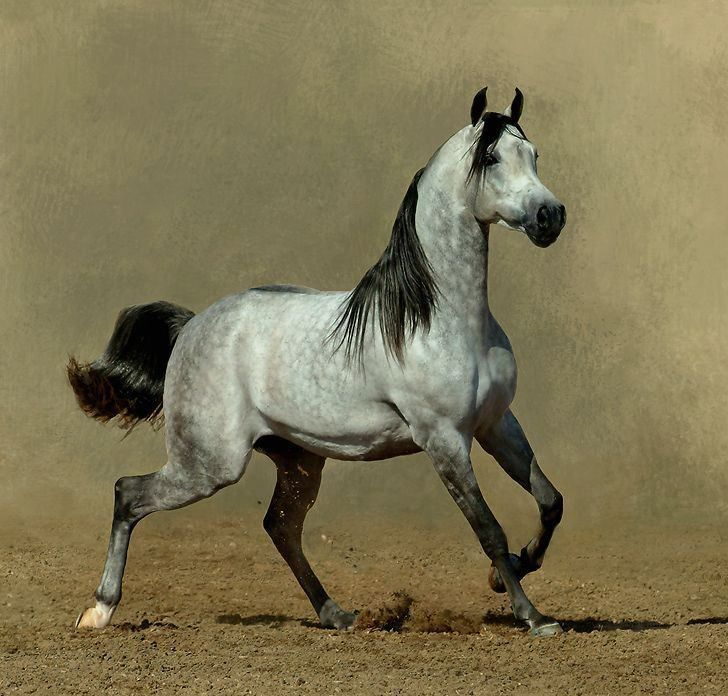 View All Images At أجمل خيول العالم صور Folder Horses Horse Breeds Beautiful Horses