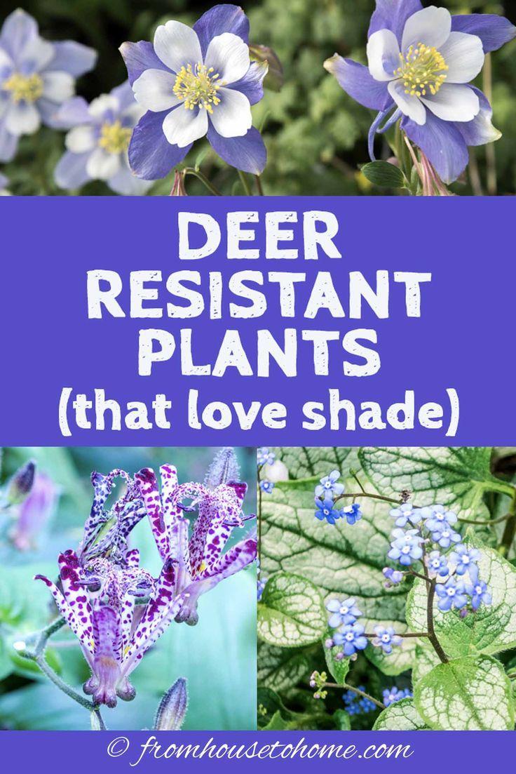 15 Beautiful Deer Resistant Shade Plants To Grow In Your Garden Pflanzen Schatten Waldpflanzen Schattenpflanzen