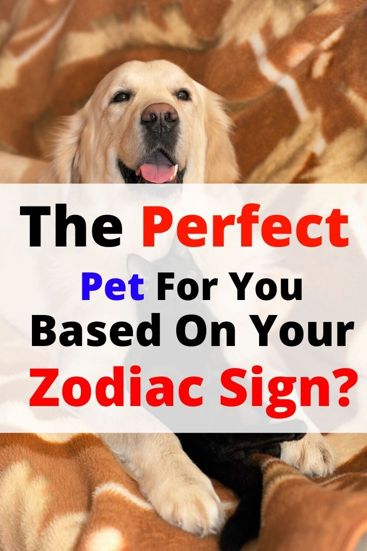 What's The Perfect Pet For You, Based On Your Zodiac Sign