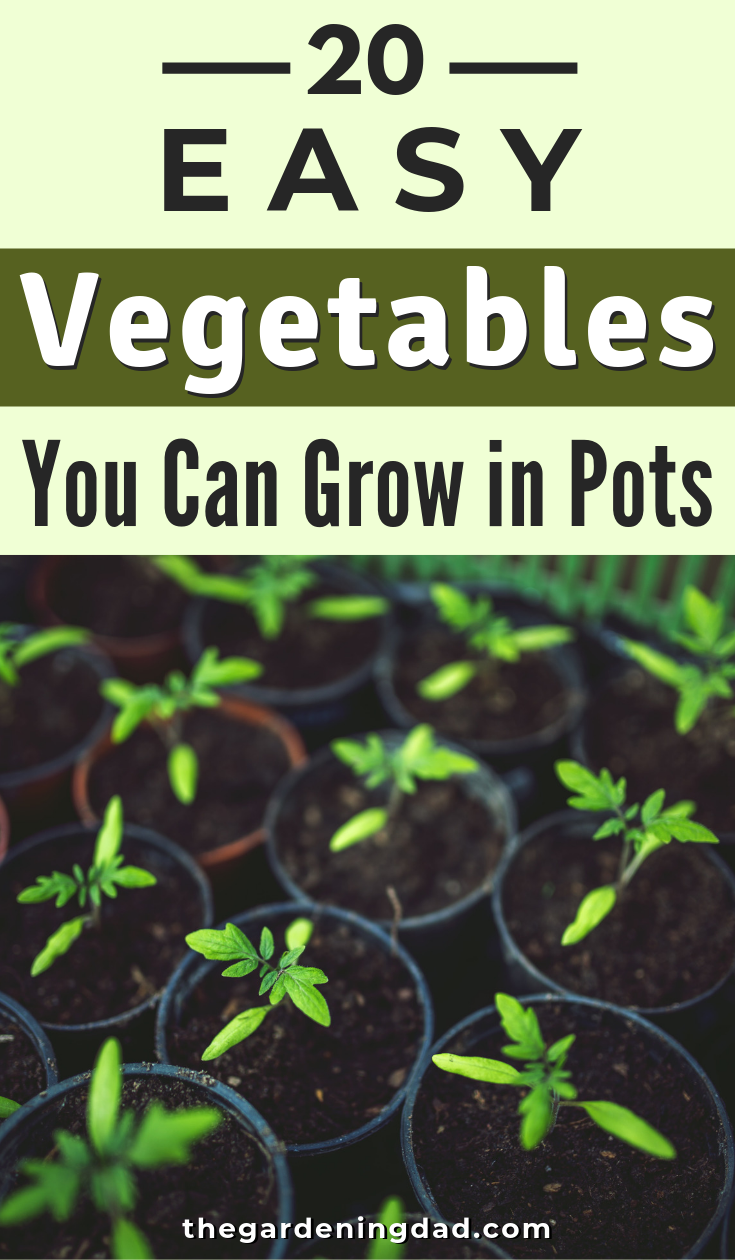 15 planting Vegetables articles ideas