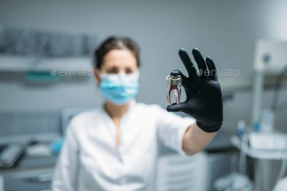 Dentist shows tooth pin and model, dental clinic by NomadSoul1. Female dentist shows tooth model, dental clinic, professional prosthetic dentistry, stomatology cabinet, odontology#dental, #model, #clinic, #shows