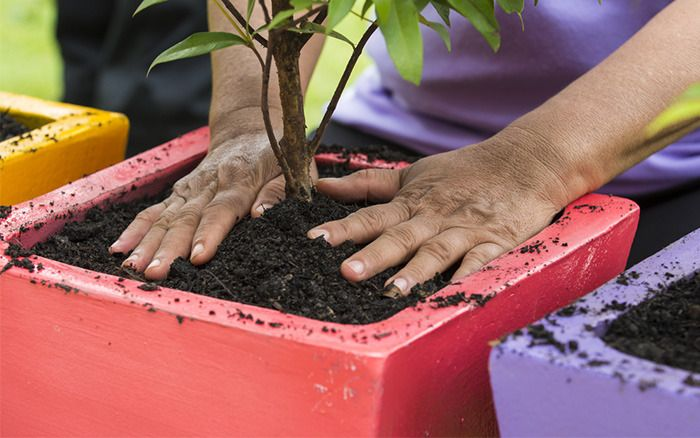 How To Choose The Right Potting Compost For Your Plants Potted Fruit Trees Potting Compost Fruit Trees