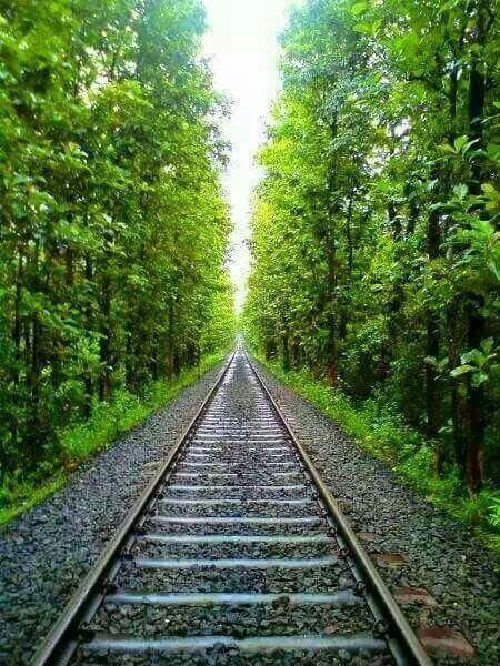 A Click From The Nilambur Shornur Train Route Scenic Routes