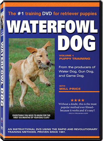 Waterfowl Dog Dvd Raw Dog Training Bird Dogs Dog Training