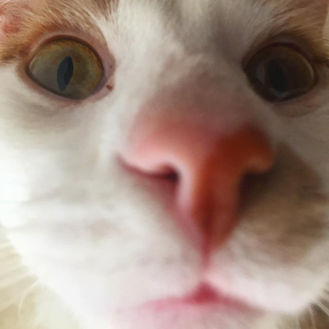 Human I Must Sniff Your Face Pet Petsofinstagram Petsofig Petlove Petstagram Petlife Petlover Cutepetclu Pet Life Cats Of Instagram Animal Lover