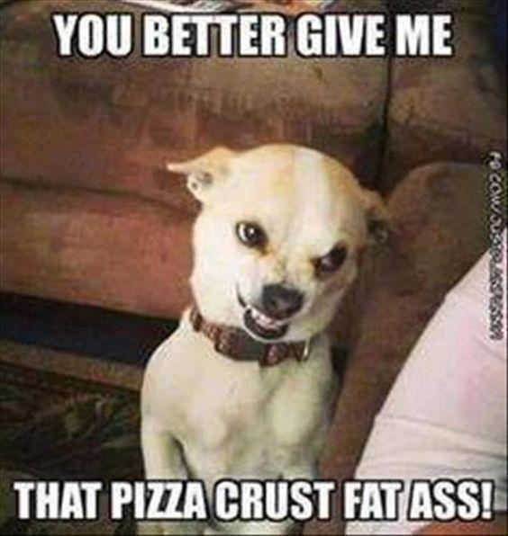 Funny Dog Memes Mycrazyemail Dogmemes Funny Animal Quotes
