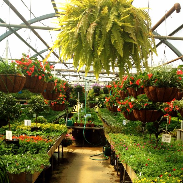 Kalamazoo Mi Greenhouse Arts Culture Attractions State Of