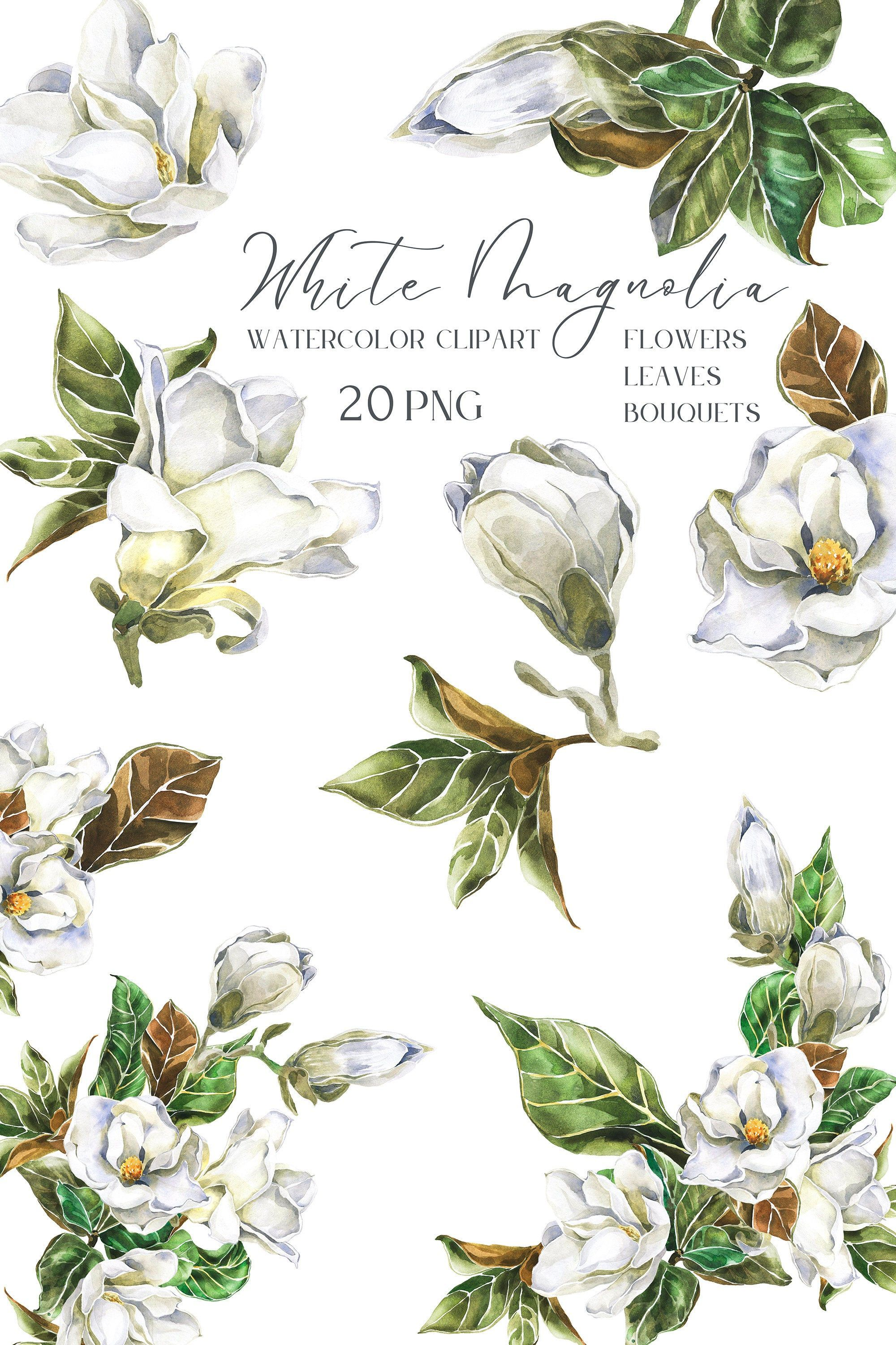 White Watercolor Magnolia Flower Clipart Spring Floral Bouquet Etsy In 2020 Flower Clipart Magnolia Flower Botanical Flowers