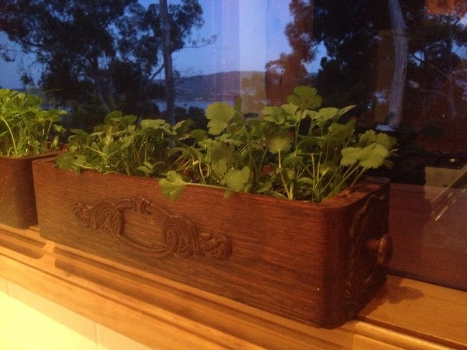 Herb Planter On Narrow Window Ledge Old Singer Sewing