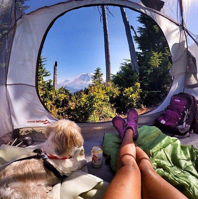 Queste adorabili foto di cani che campeggiano vi faranno venire voglia di escursioni nella natura #campingpictures