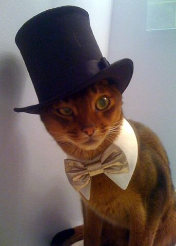 cat in a top hat what's not to like?