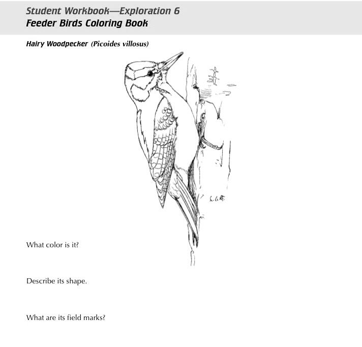Cornell Lab Of Ornithologys Free FEEDER BIRDS COLORING BOOK A Lovely Introduction For Beginning Bird Watching And Identification