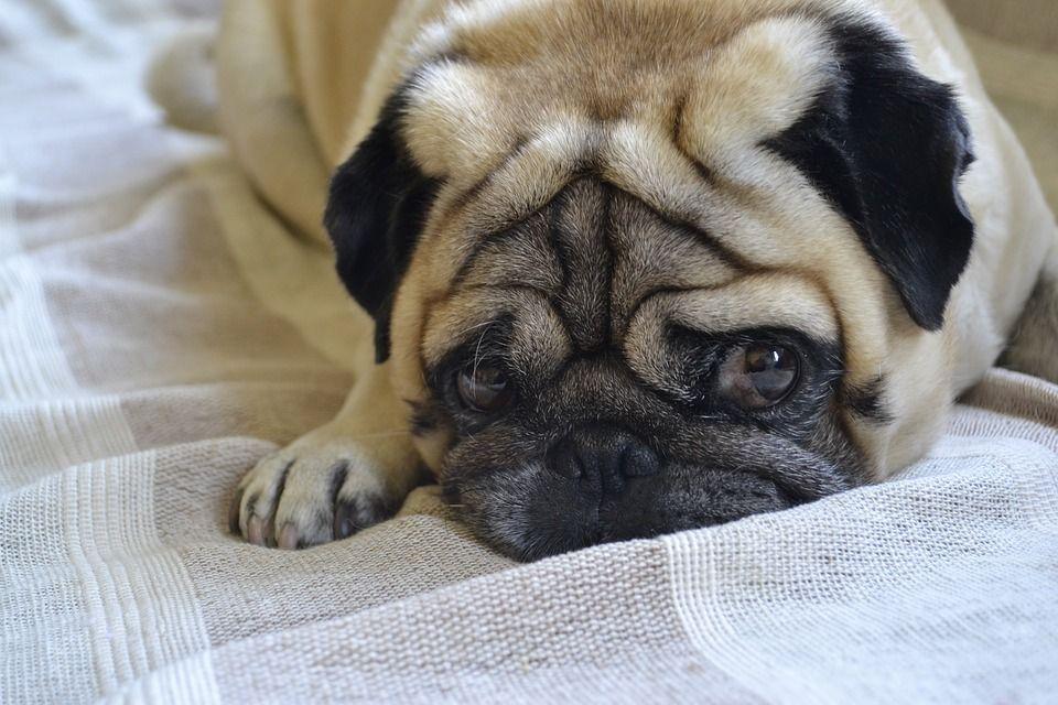 4 Steps To Potty Train An Older Dog Best Dog Breeds Dog