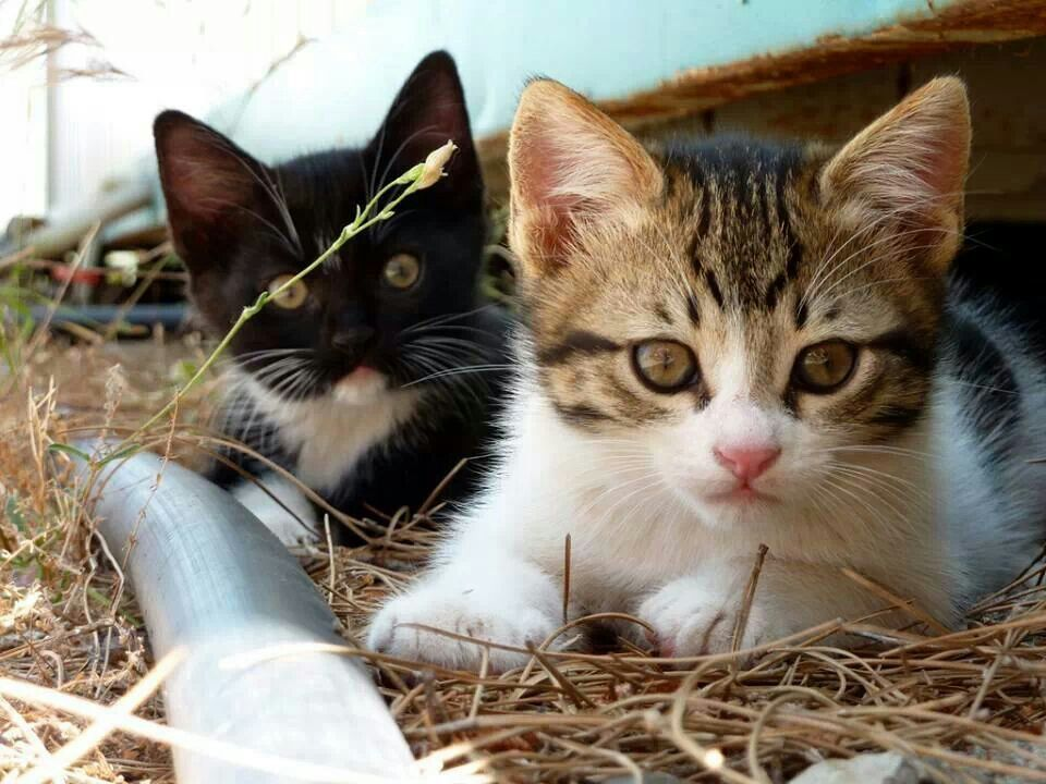 Pin By Sandhya On Animals Kittens Cutest Cats Buy A Cat