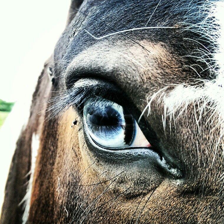 Wall eyed horse