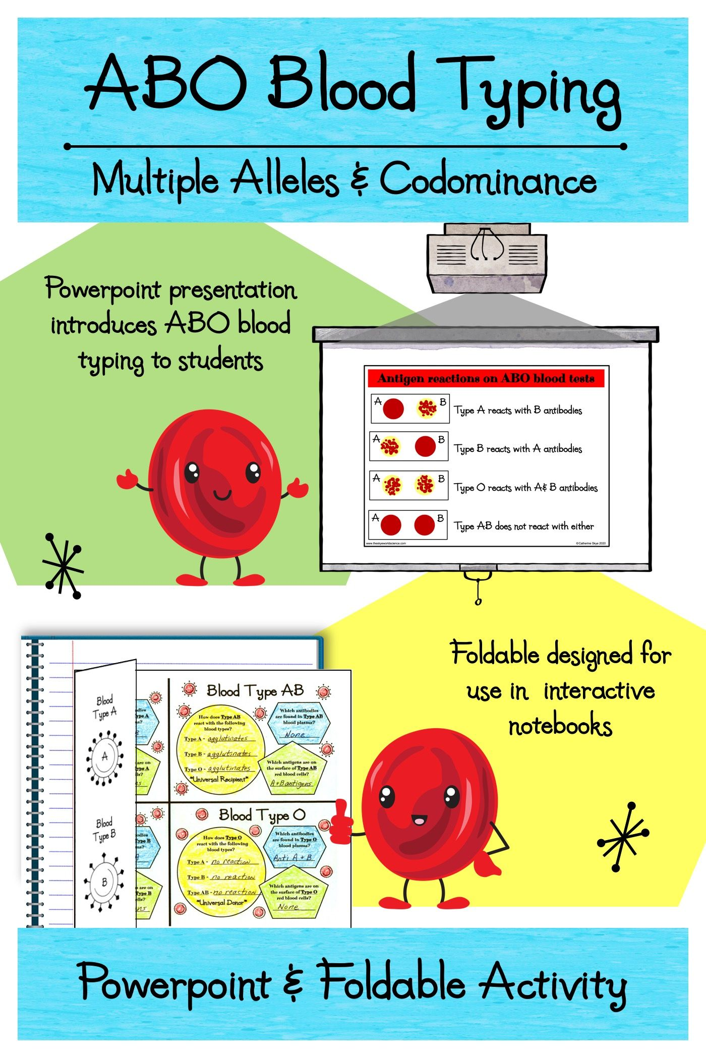 Blood Types Worksheet - worksheet