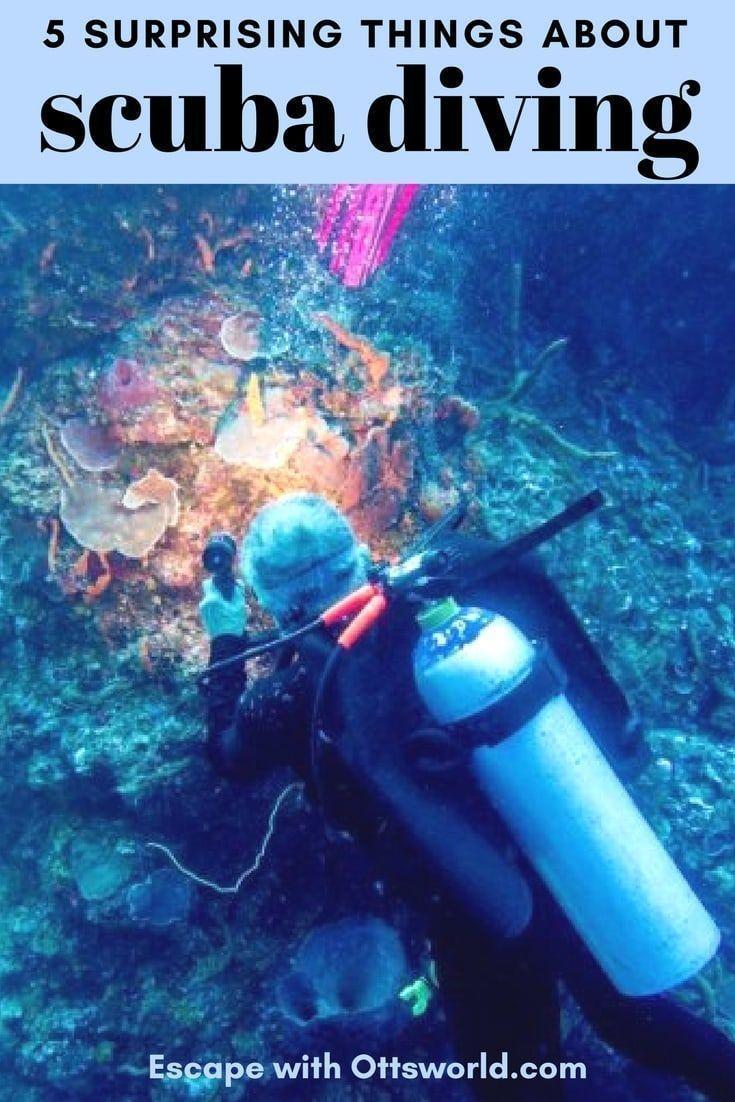 5 Scuba Diving Surprises You Never Knew About | Best scuba ...