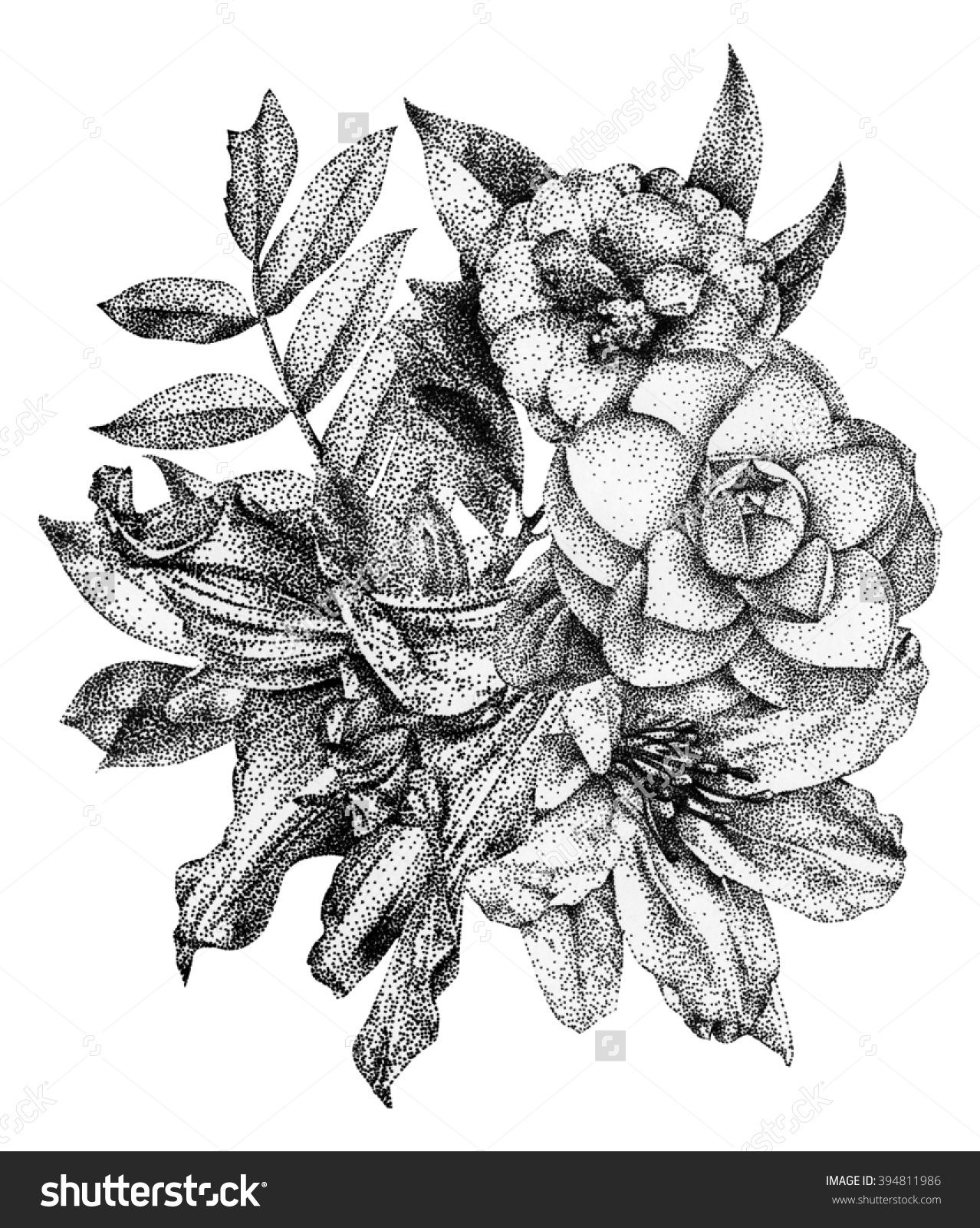 Composition Of Different Spring Flowers And Plants Drawn By Hand With Black Ink Graphic Drawing