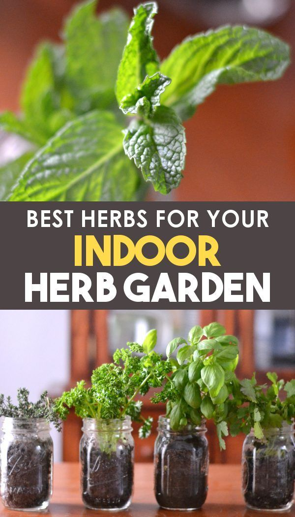 Best Herbs for Indoor Herb Gardens!