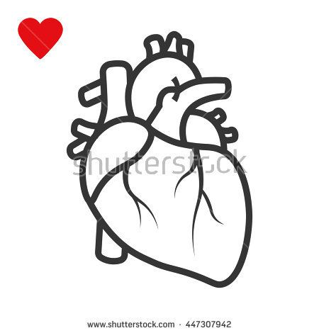 Realistic Heart Icon Isolated On White Background Vector Mdical