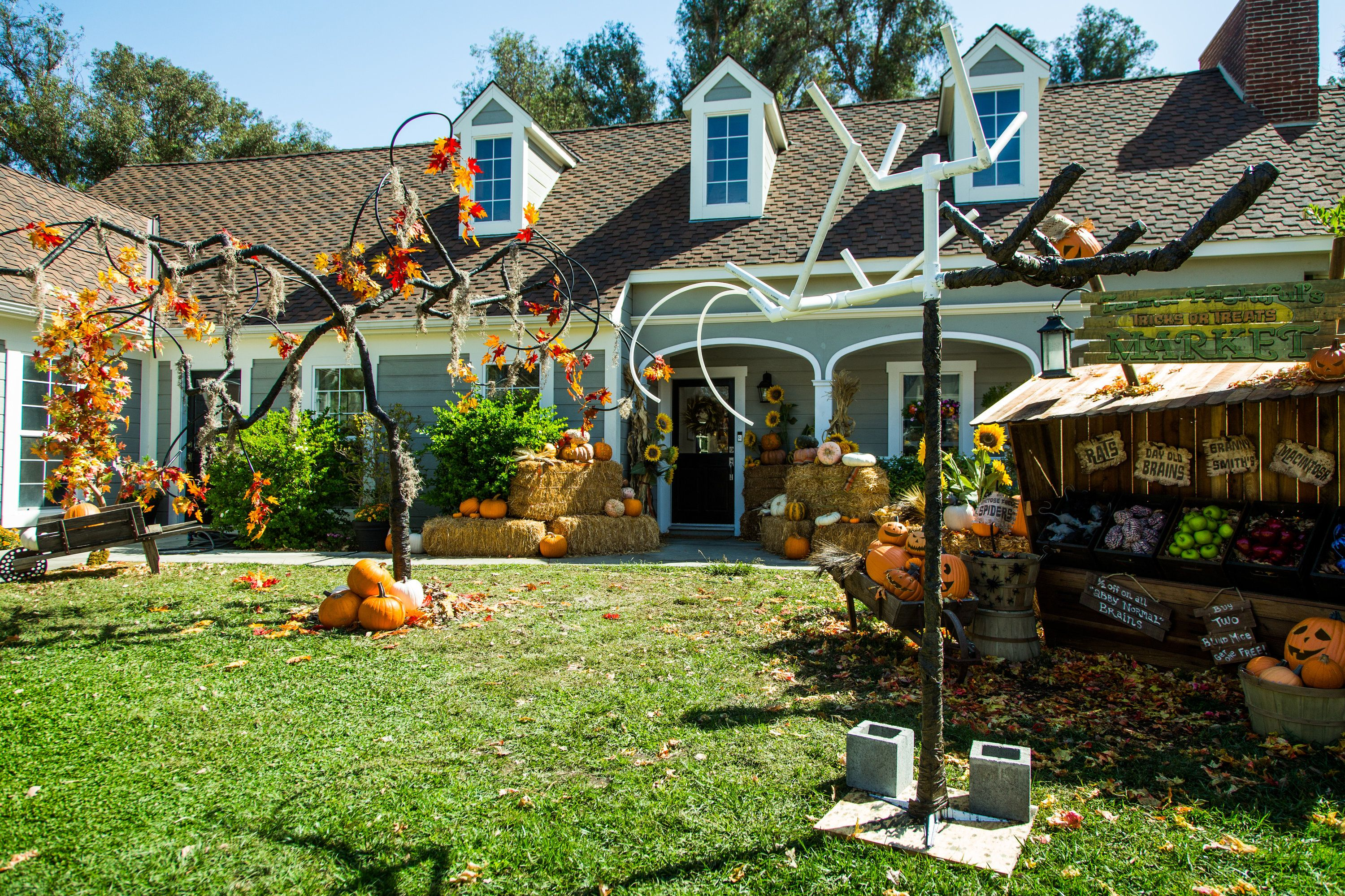 Get Your Yard Halloween Ready With Paige Hemmisu0027 DIY Spooky Halloween Tree!  Tune In