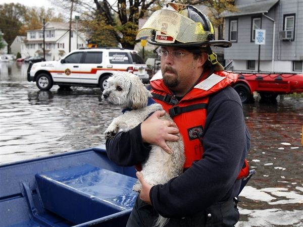 Hurricane Sandy Animal Rescues: 11 Amazing Photos Of Pets Saved From Danger