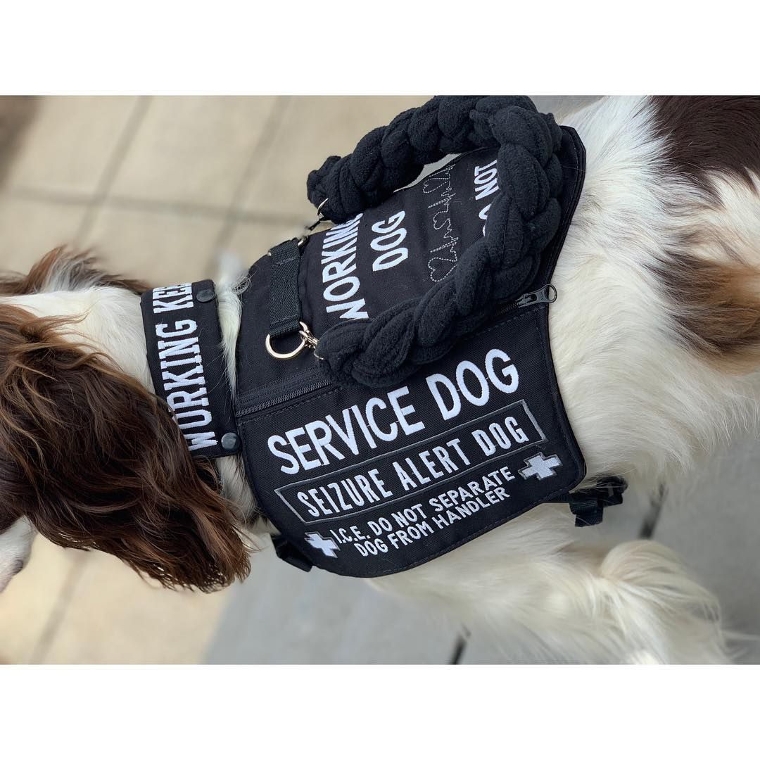 Service Dog Vest The Working K9 Service Dogs Gear Service Dog