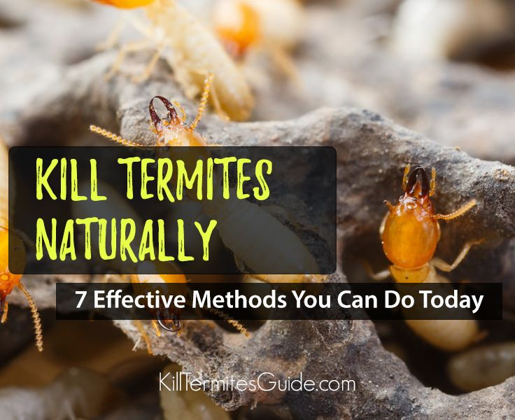 7 Effective Methods You Can Do Today to Get Rid of