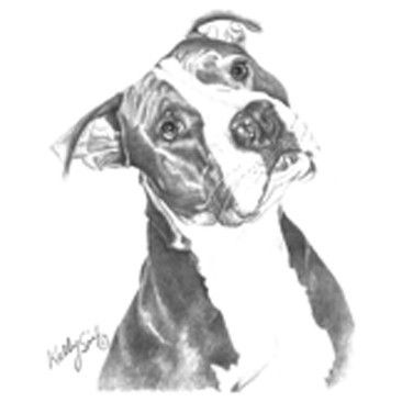 Pit Bull Pitbull Puppy Dog Black & White Kelly Six Artist ...