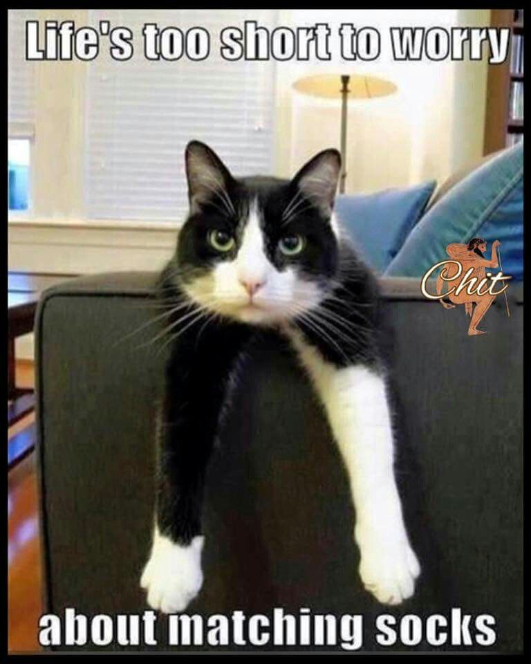 Pin By Patti Floyd On Cats Black White Cats Funny Animal Memes
