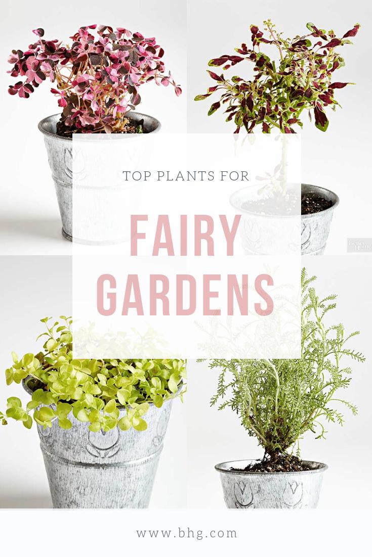 602385c160e08fb01c75d3fe2ab842bf - Best Plants For Miniature Fairy Gardens