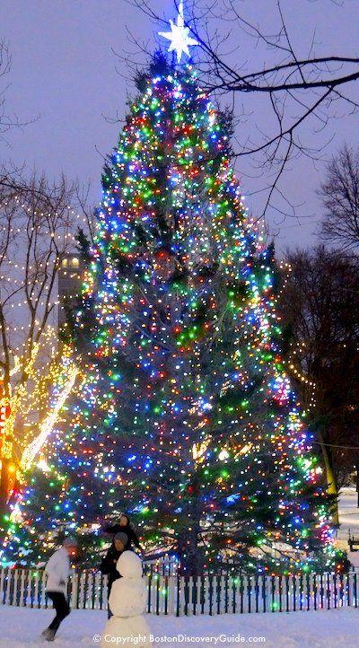 Christmas Tree in Boston Common - Christmas Tree In Boston Common Christmas Lights/Decor Around The