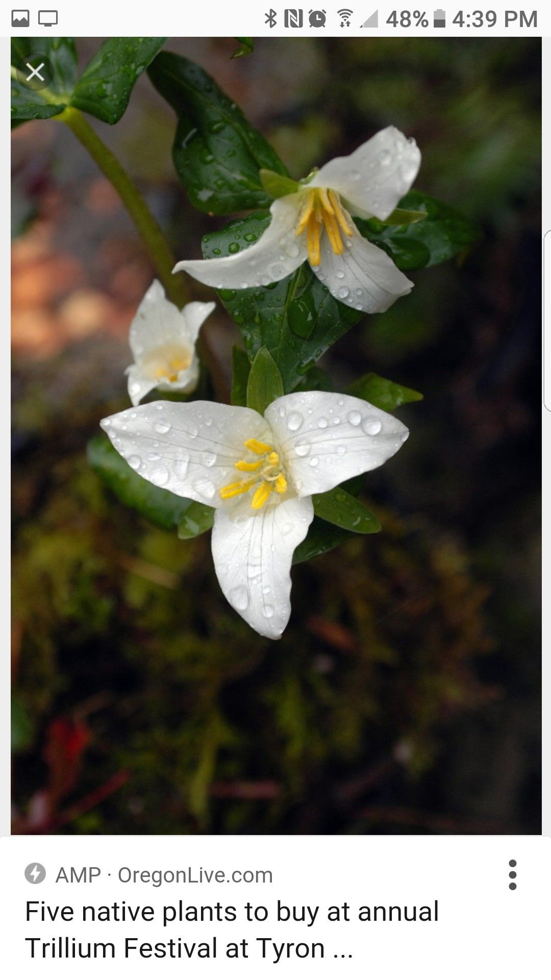 Gartenplanung Ipad Pin Von Salma Rosalin Auf Raindrops Morning Dew