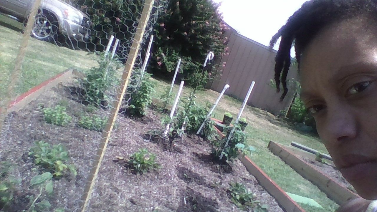 Simple DIY ! Tomatoes held up by PVC pipes; twines and cucumbers ...