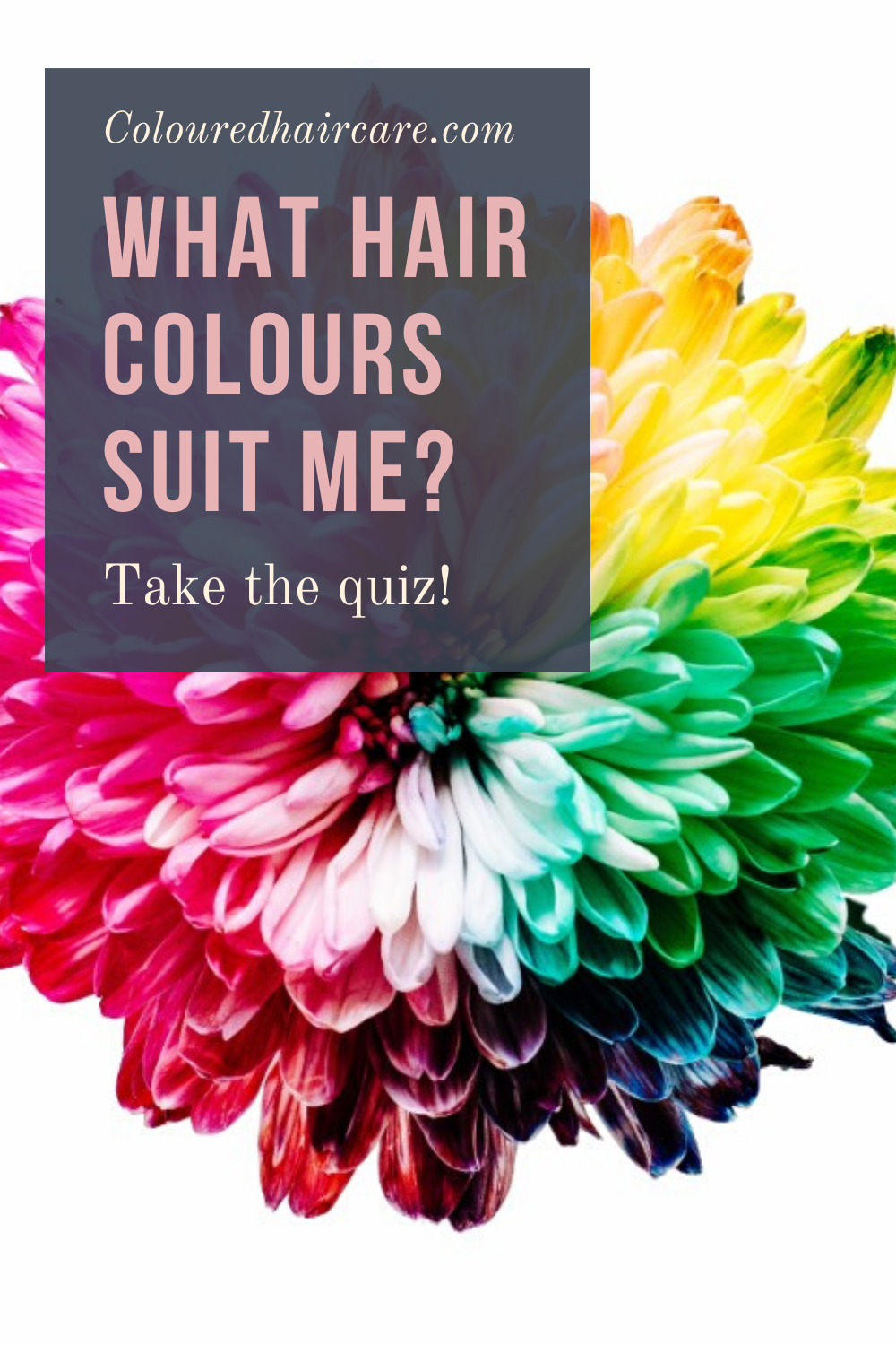 What Hair Colours Suit Me Take The Quiz In 2020 What Hair Colour Suits Me Which Hair Colour Suits Me Which Hair Colour