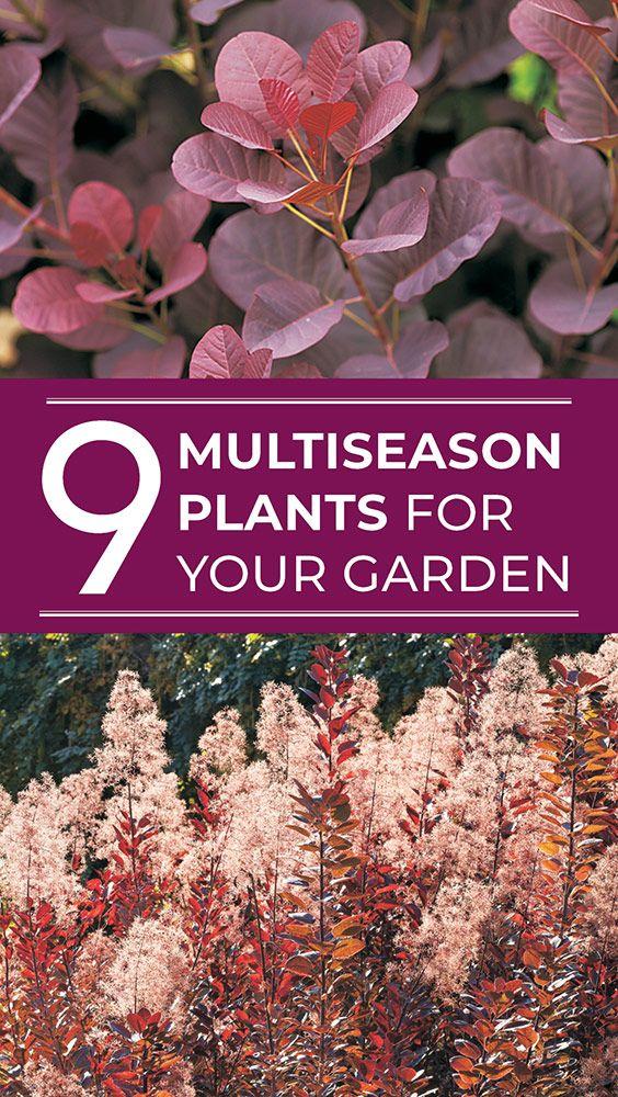 Add these plants to your garden to get color in every season #GardenIdeas #GardenDesign #Shrubs #Perennials #PerennialGarden #GardenGateMagazine