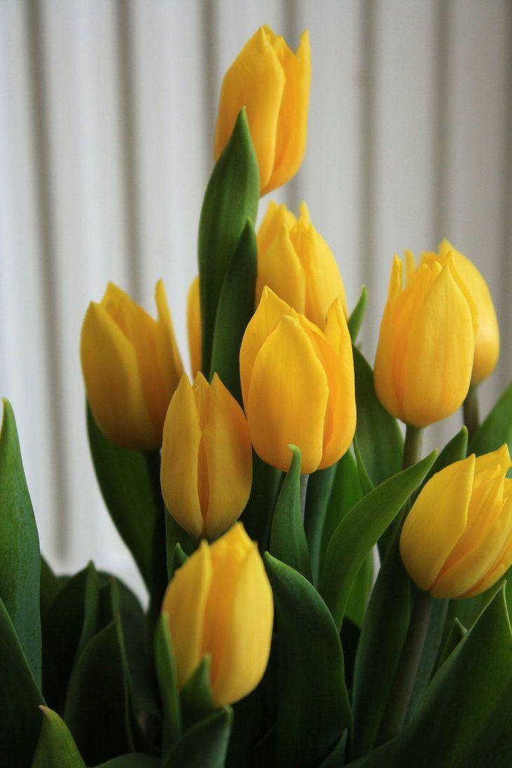 mas_tulipanes_by_peluzita123-d30dzaw.jpg 730×1.095 piksel