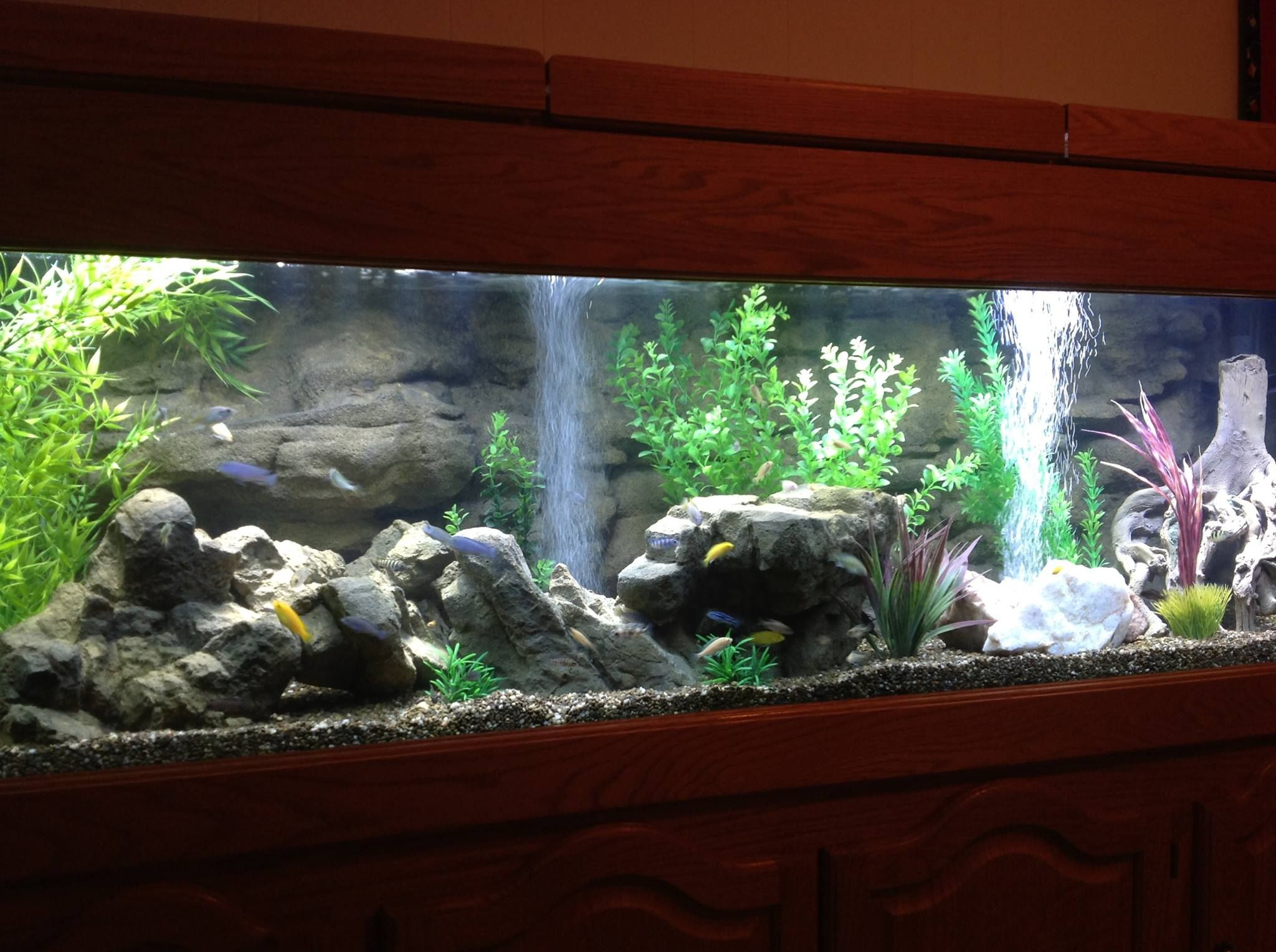 72x24 olgas 3d background and some decoration rocks up for Fish tank background ideas