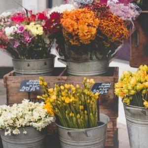 Online-Blumengeschäft Colvin – frische Blumensträuße zu Weihnachten finden