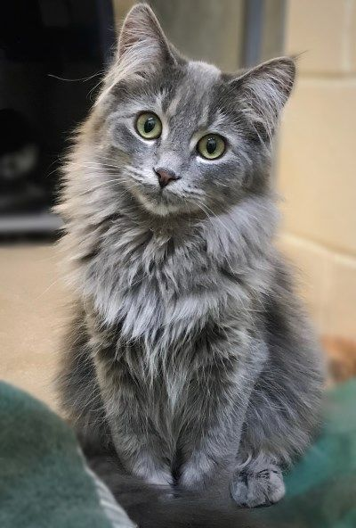 Typically most cats don't want bathing, however, there are many exceptional cases why this is often helpful, If the cats get rolled into one thing that they can't withdraw all by themselves, or as an alternative, their long hairs are matted, it may well be a good plan to wash the cat.