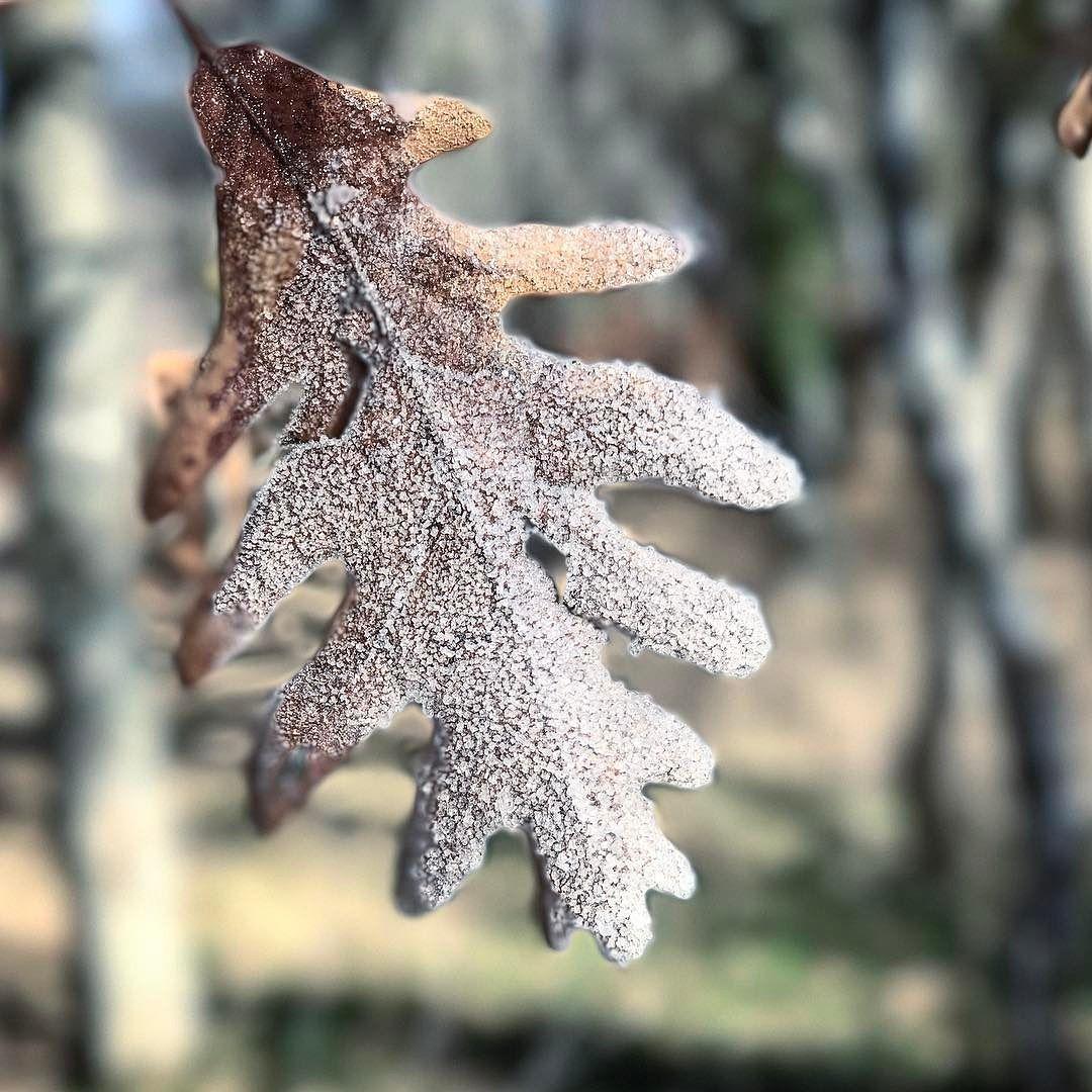 Fría mañana de vuelta al cole #invierno #hoja #hielo