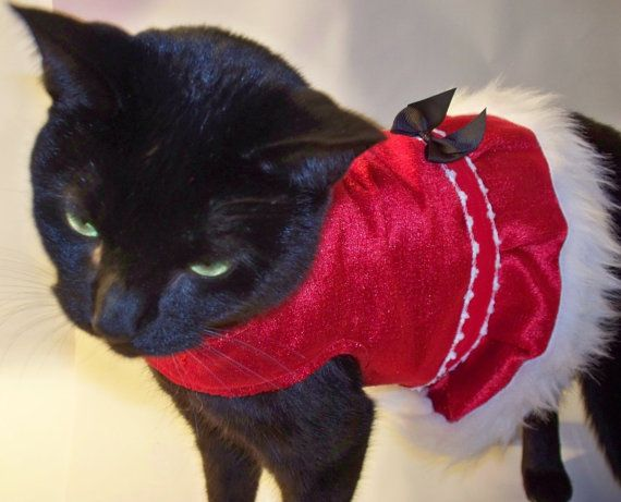 devil Costume for Cats | PetSmart Halloween Costume & Cat Toy ...