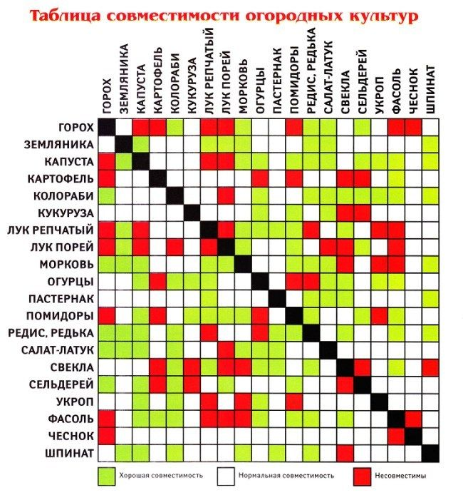 таблица совместимости овощных культур на огороде