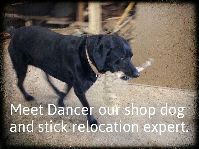 Our shop dog.