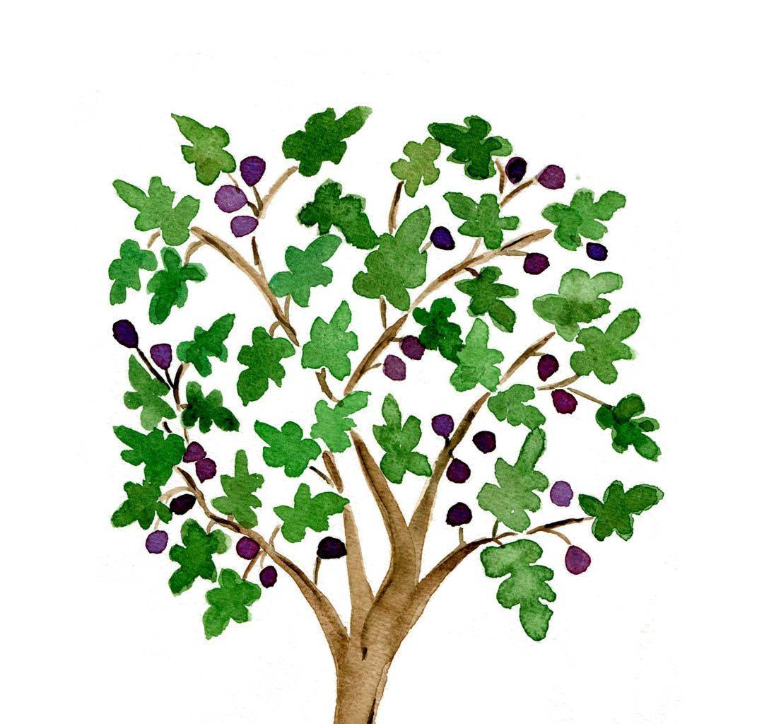 fig tree art - Google Search