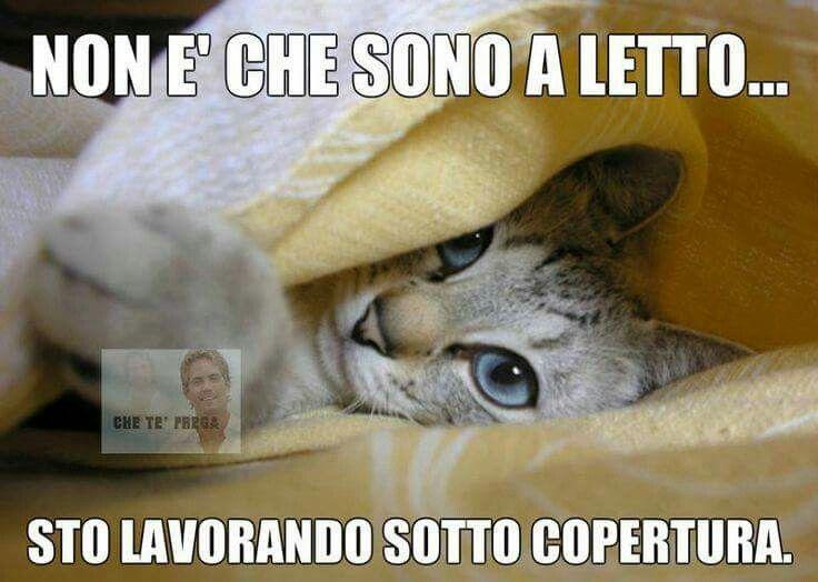 Il gatto sempre molto furbo humour katzen kurzhaar for Buongiorno assonnato